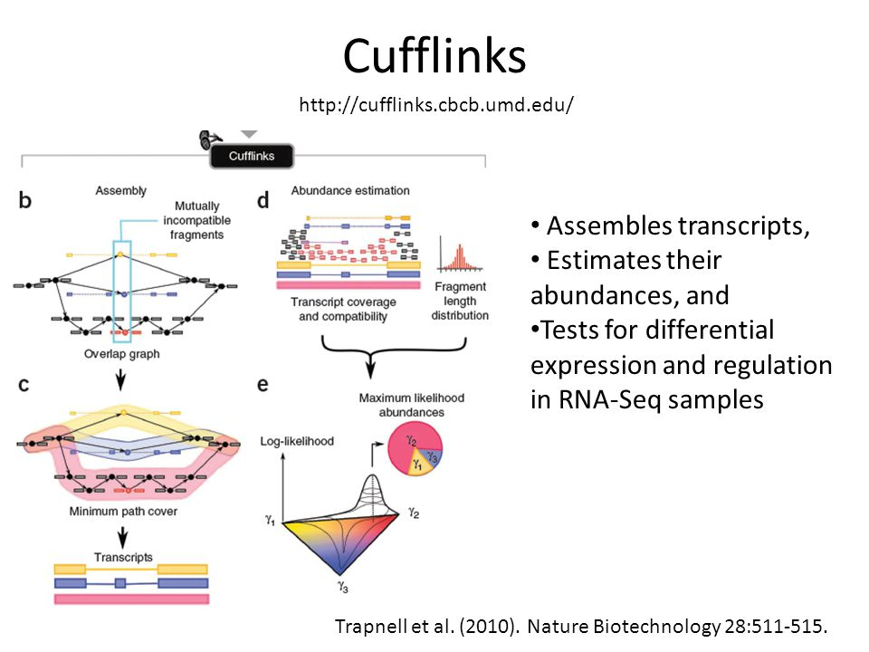 Cufflinks Assembles transcripts, Estimates their abundances, and
