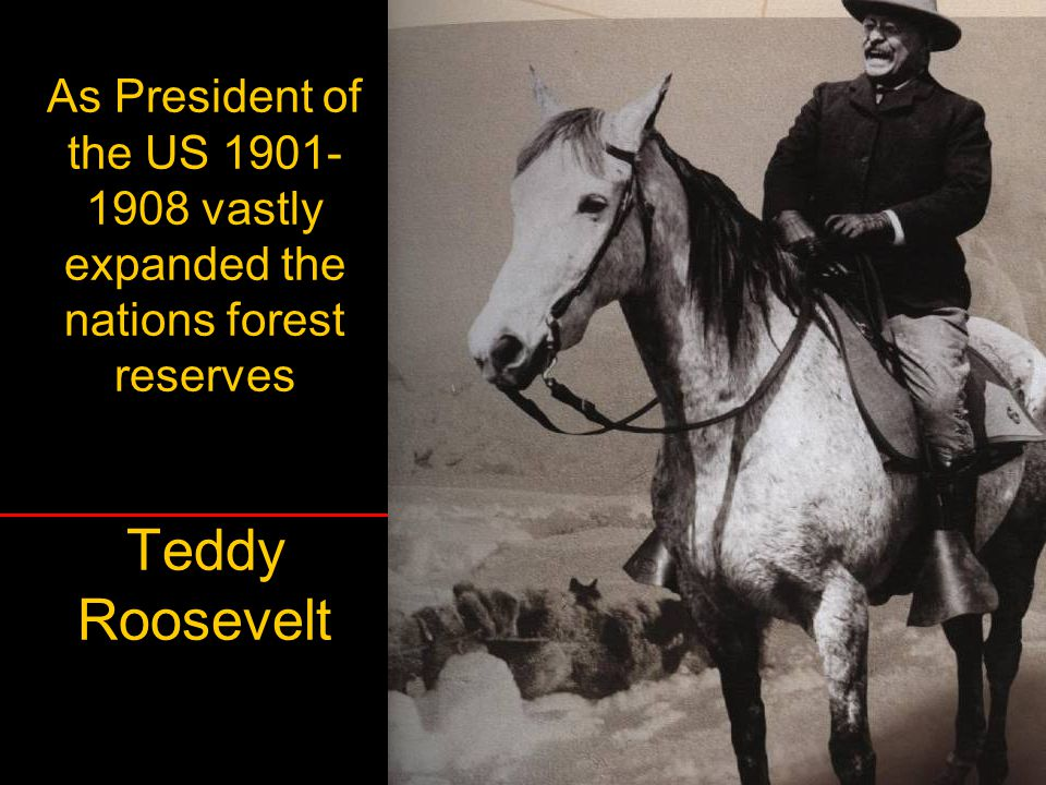 As President of the US 1901-1908 vastly expanded the nations forest reserves Teddy Roosevelt