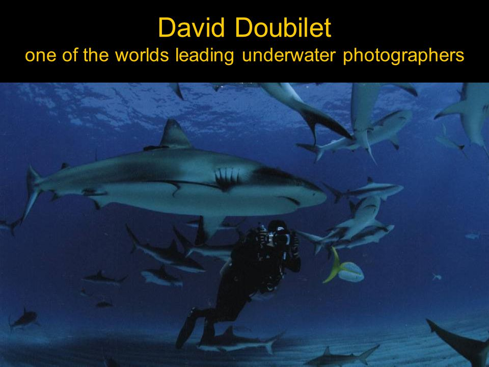 David Doubilet one of the worlds leading underwater photographers