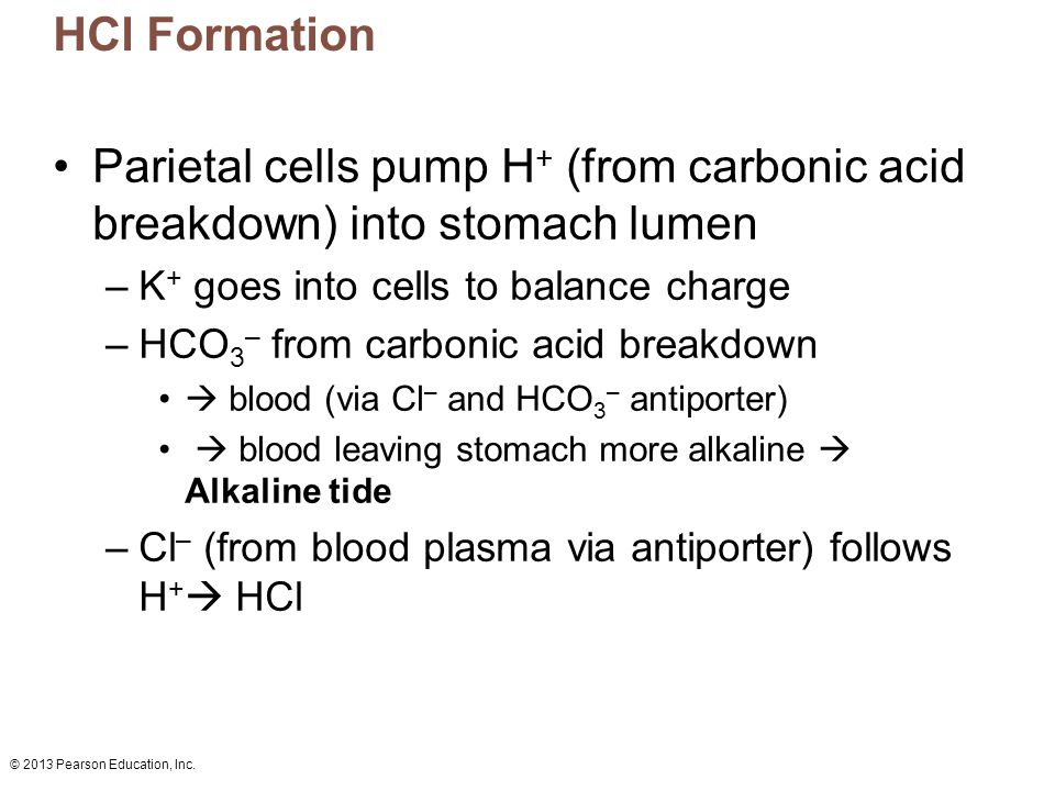HCl Formation Parietal cells pump H+ (from carbonic acid breakdown) into stomach lumen. K+ goes into cells to balance charge.