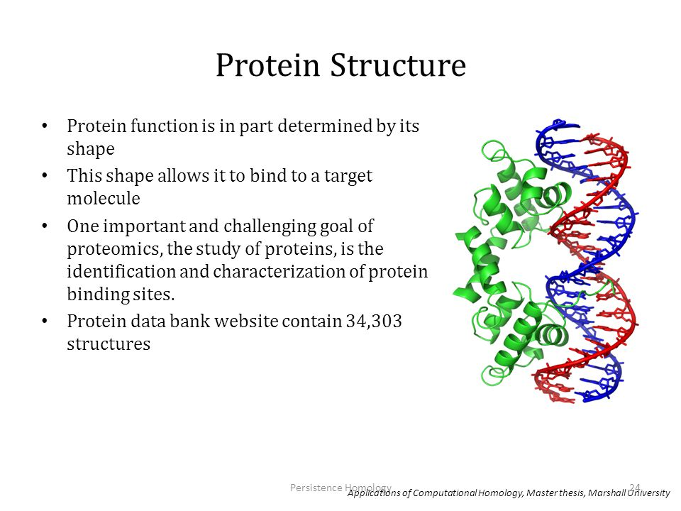 Protein Structure Protein function is in part determined by its shape