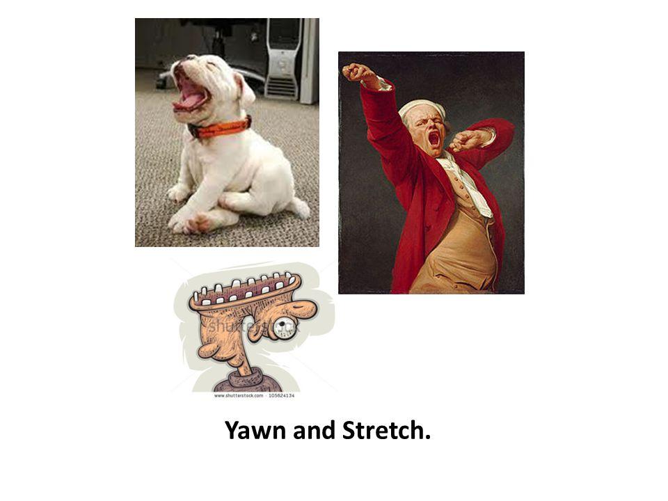 Yawn and Stretch.