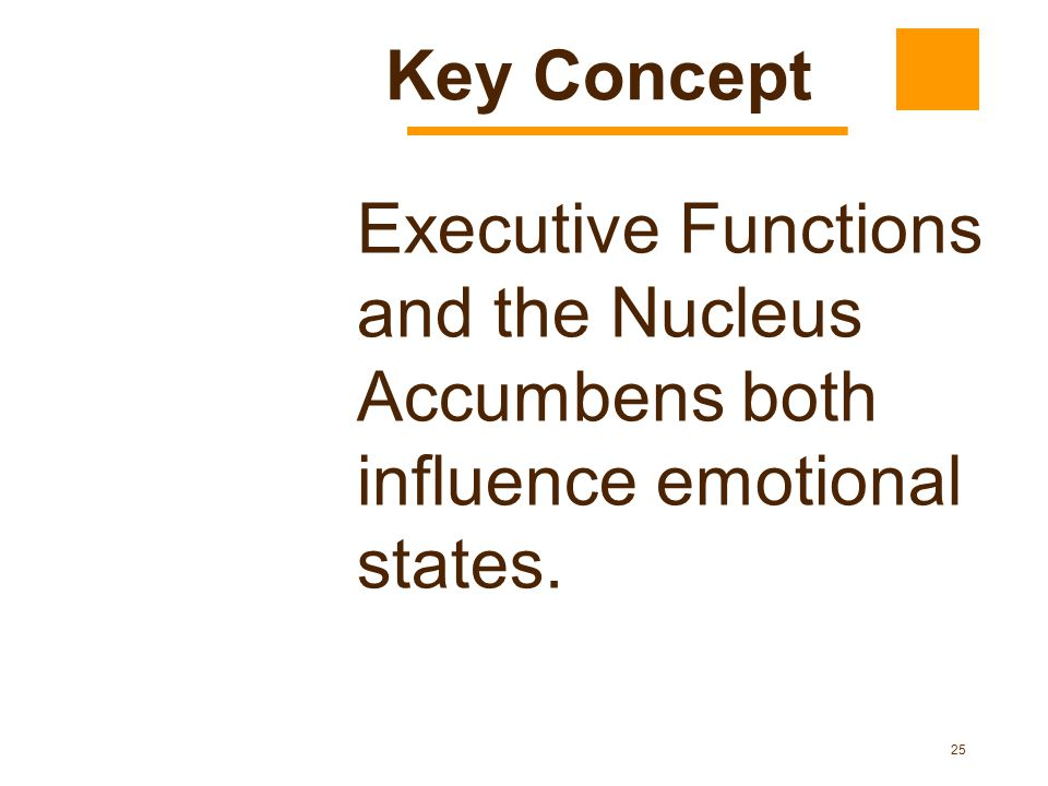 Key Concept Executive Functions and the Nucleus Accumbens both influence emotional states.