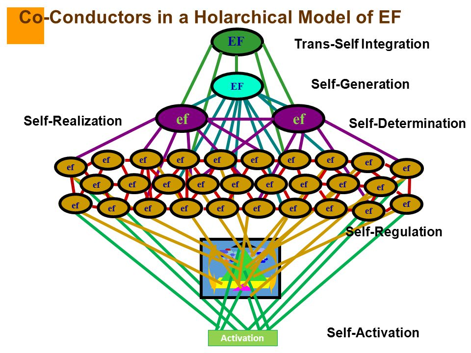 Co-Conductors in a Holarchical Model of EF
