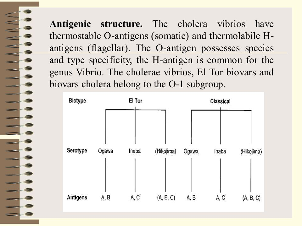 Antigenic structure.