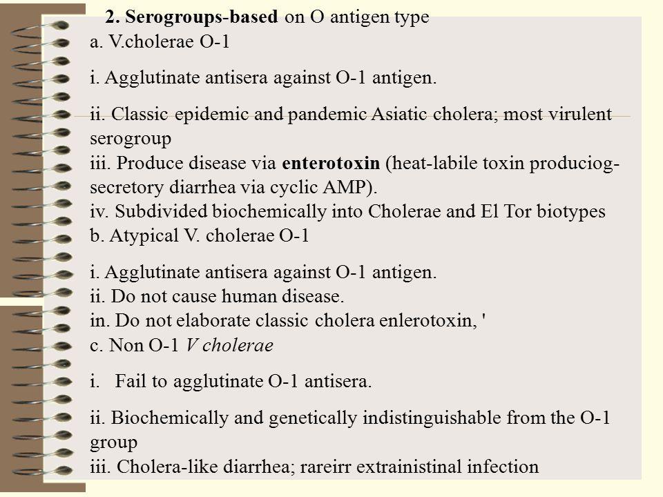 2. Serogroups-based on O antigen type a. V.cholerae O-1