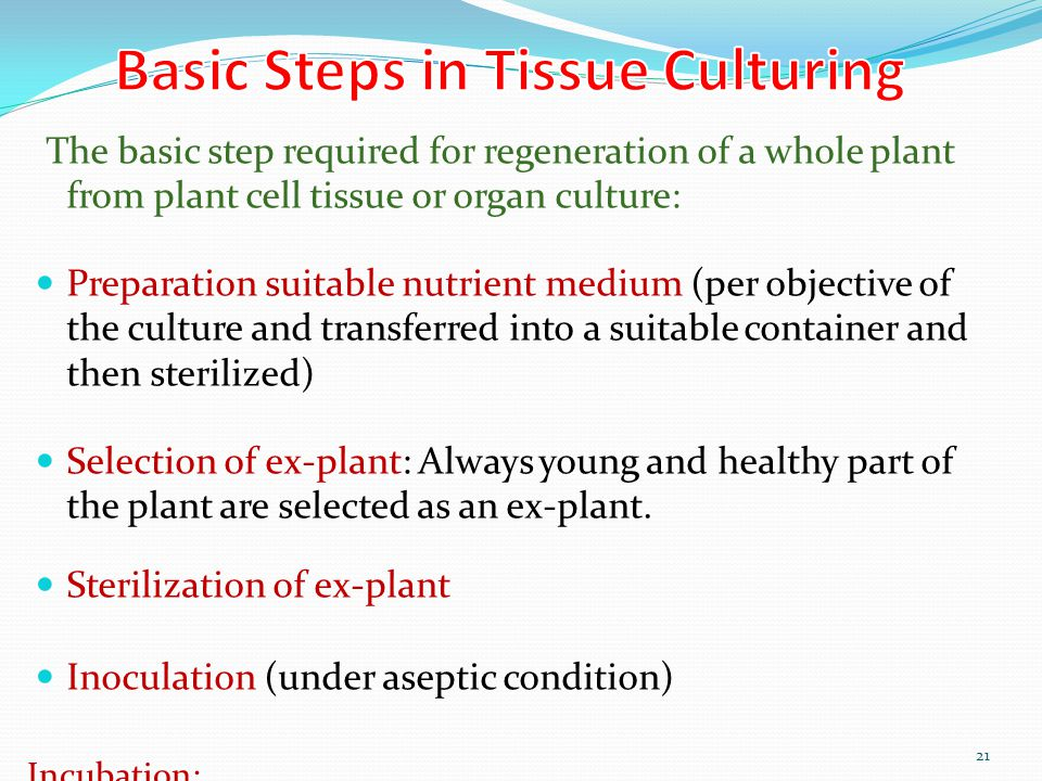 Basic Steps in Tissue Culturing