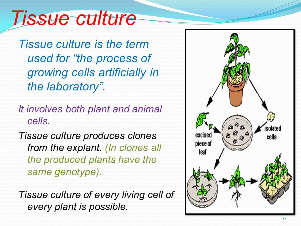 Tissue culture Tissue culture is the term used for the process of growing cells artificially in the laboratory .
