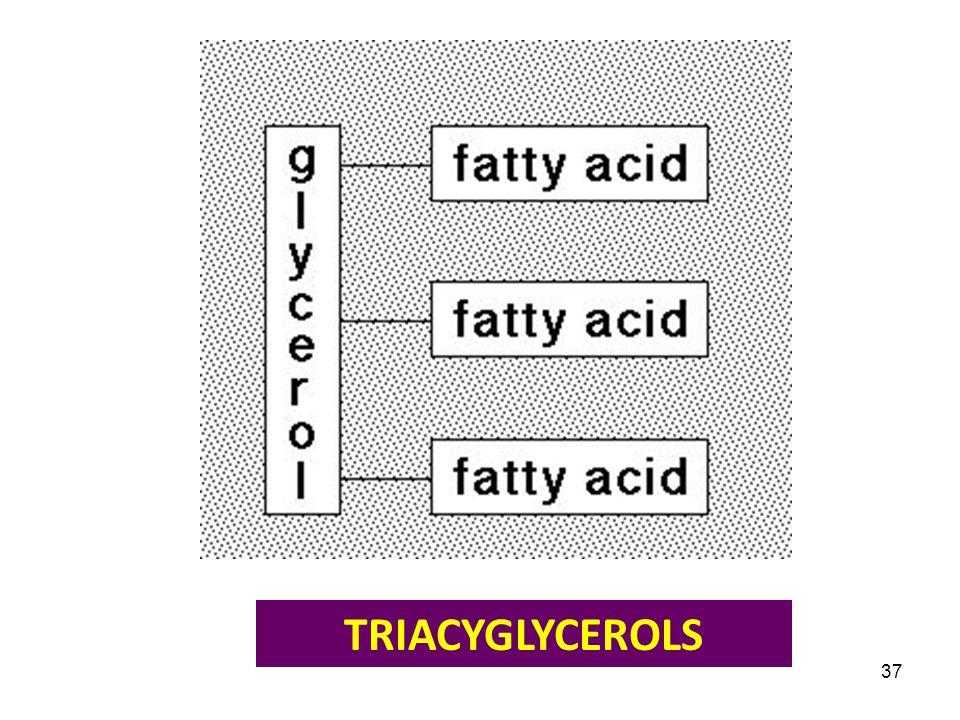 TRIACYGLYCEROLS