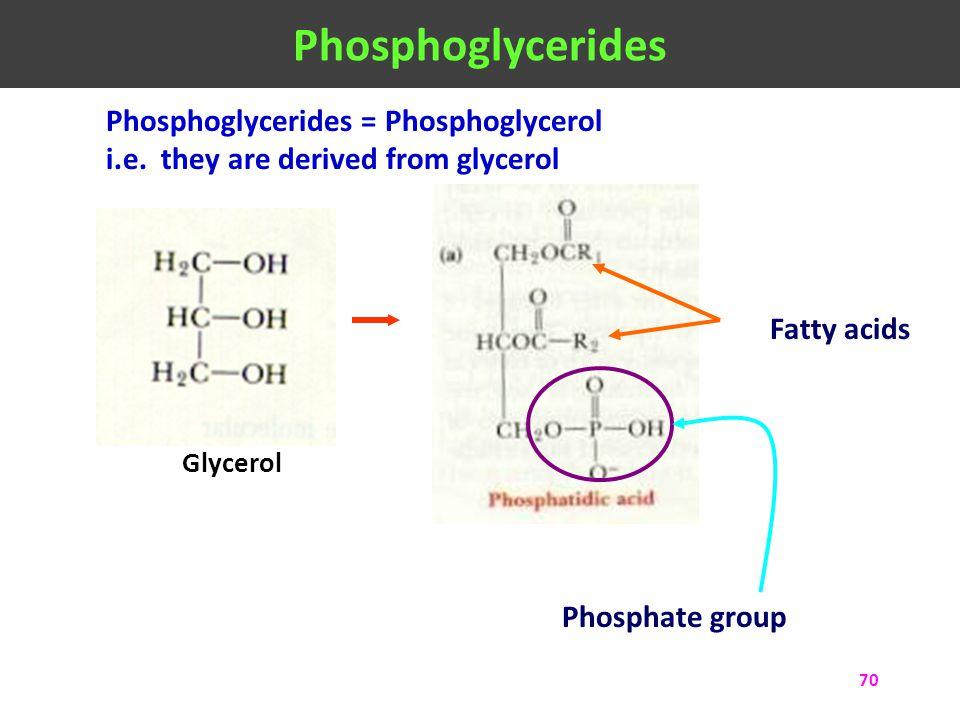 Phosphoglycerides Phosphoglycerides = Phosphoglycerol