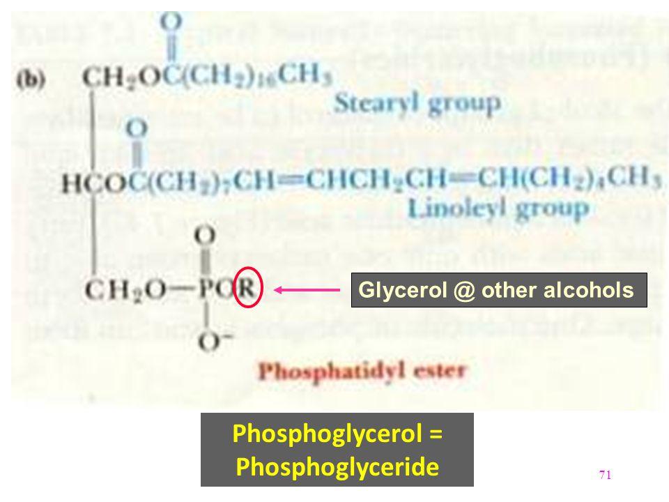 Phosphoglycerol = Phosphoglyceride