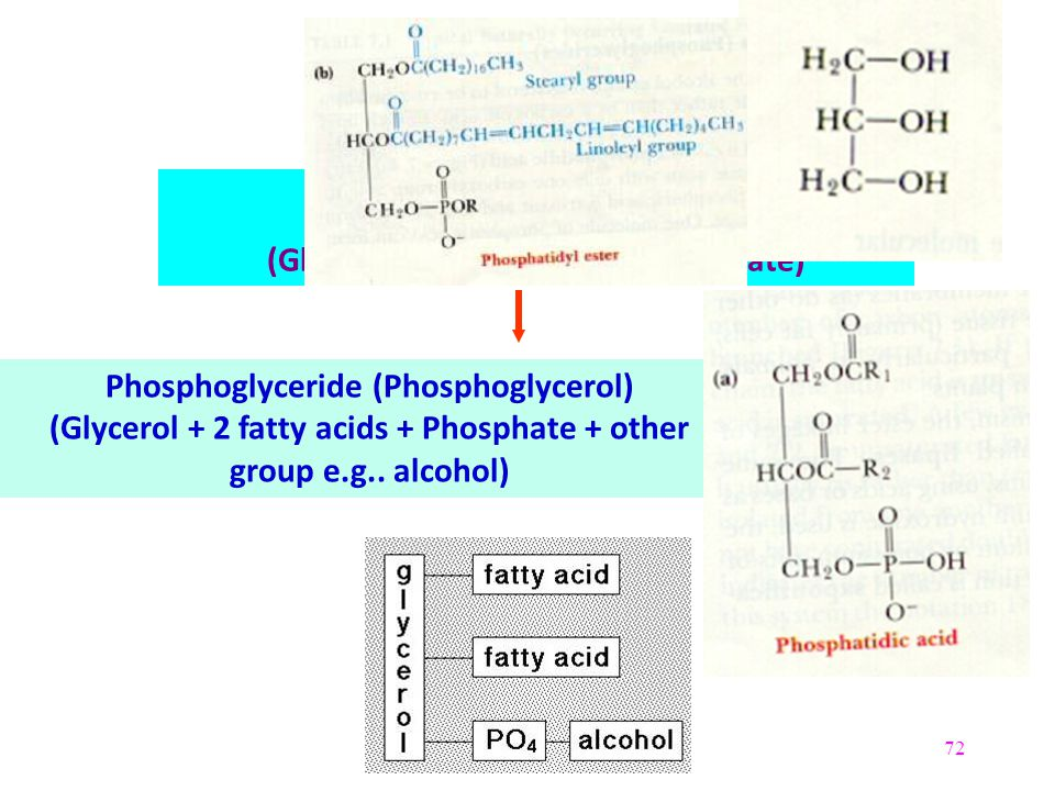 Glycerol (Trihydroxyglycerol)