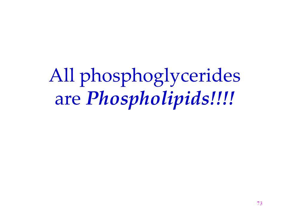 All phosphoglycerides are Phospholipids!!!!