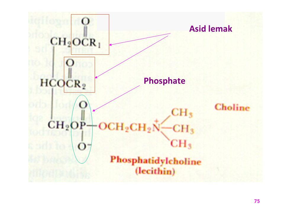 Asid lemak Phosphate