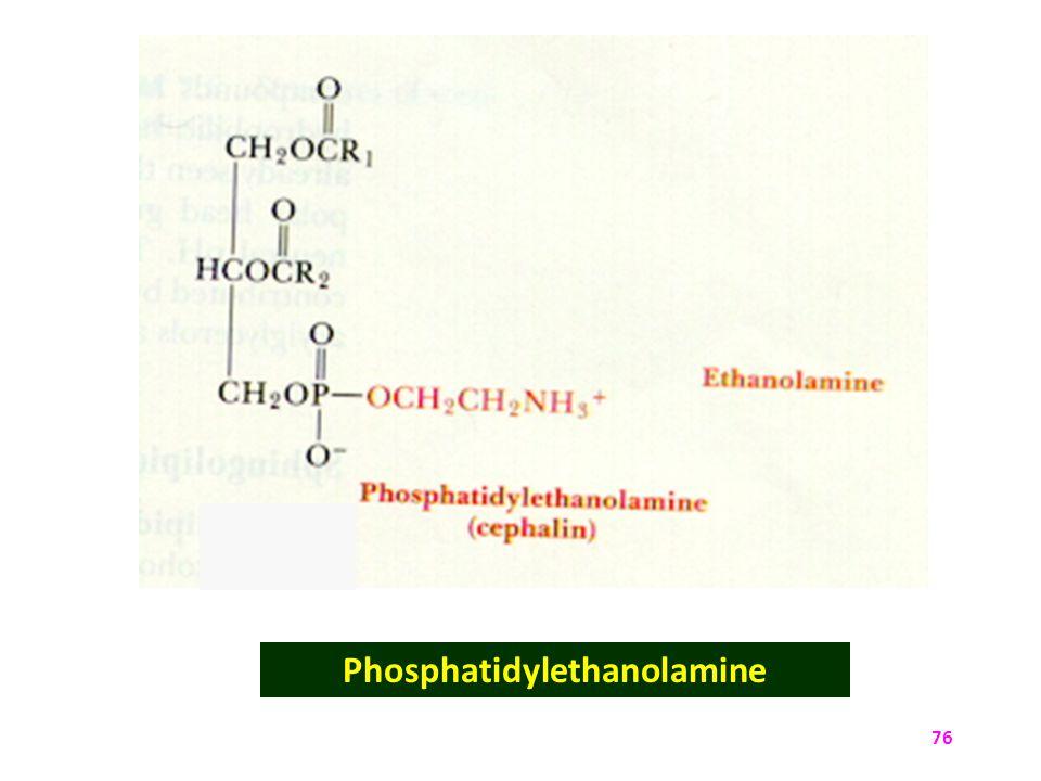 Phosphatidylethanolamine