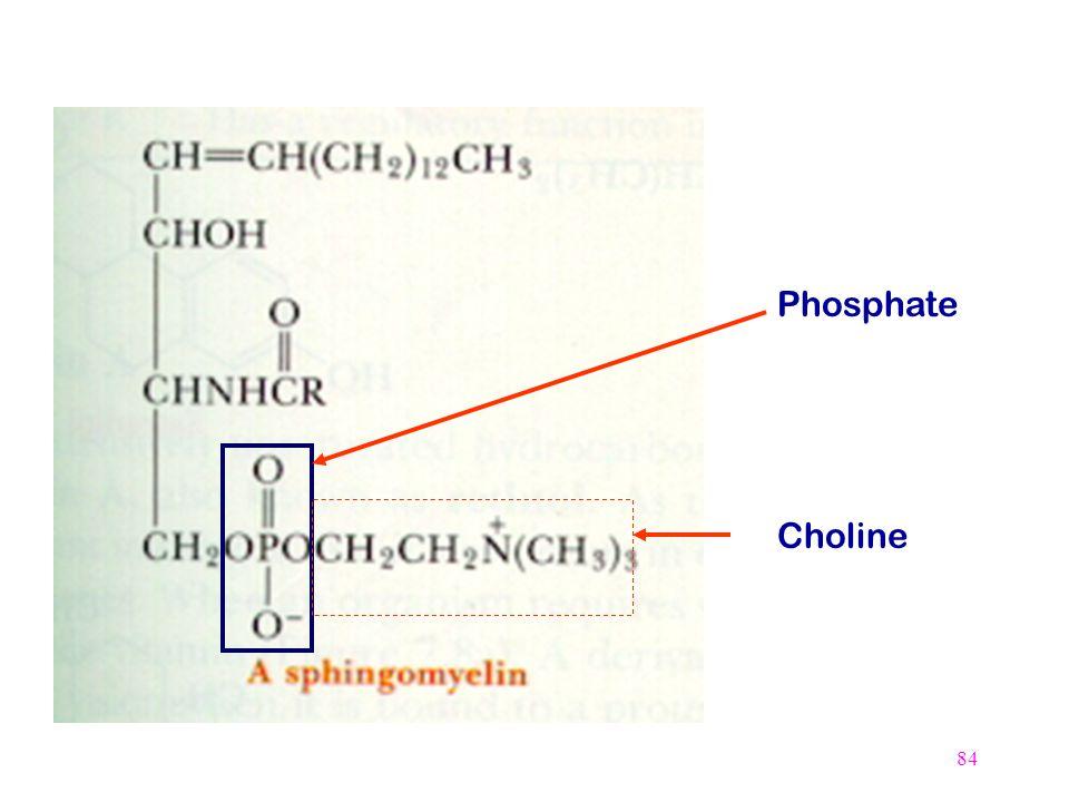 Phosphate Choline