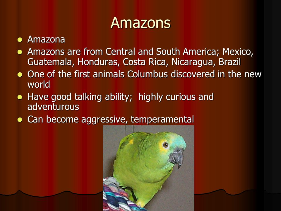 Amazons Amazona. Amazons are from Central and South America; Mexico, Guatemala, Honduras, Costa Rica, Nicaragua, Brazil.