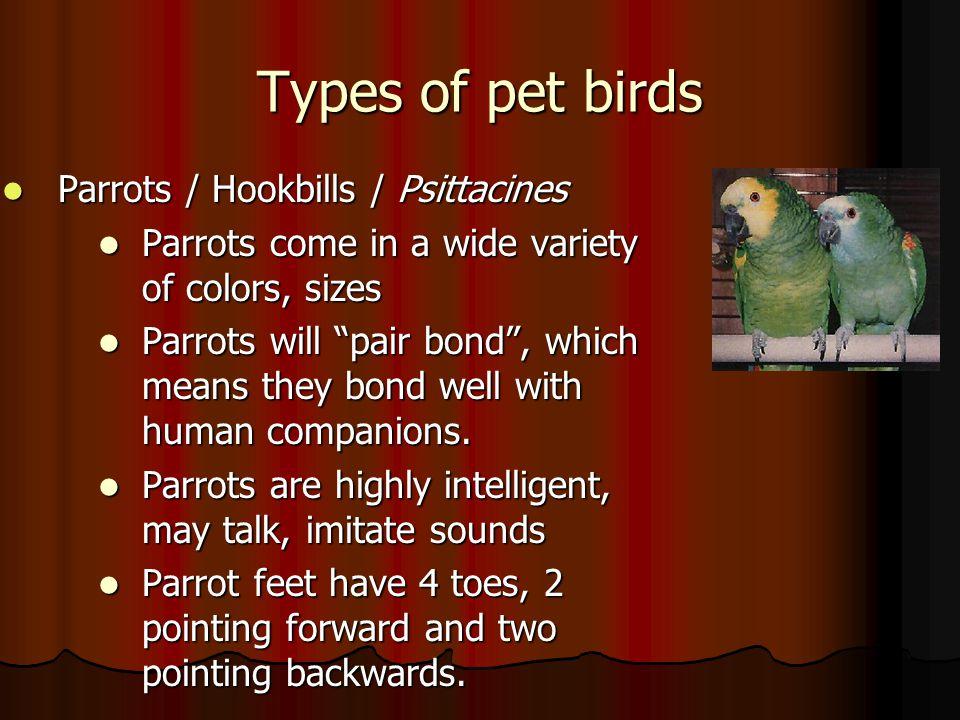 Types of pet birds Parrots / Hookbills / Psittacines
