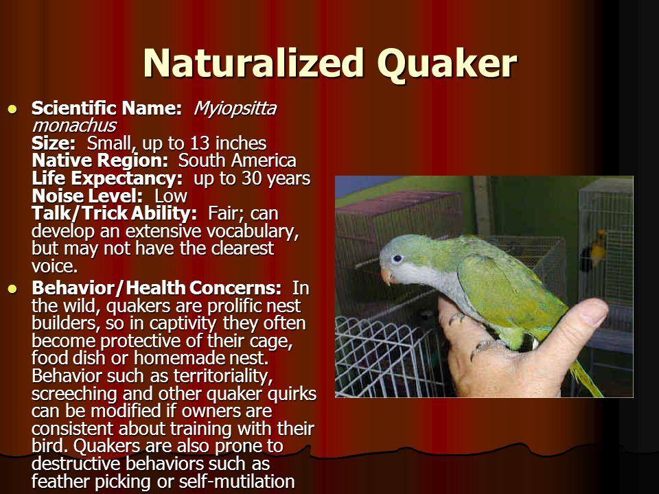 Naturalized Quaker