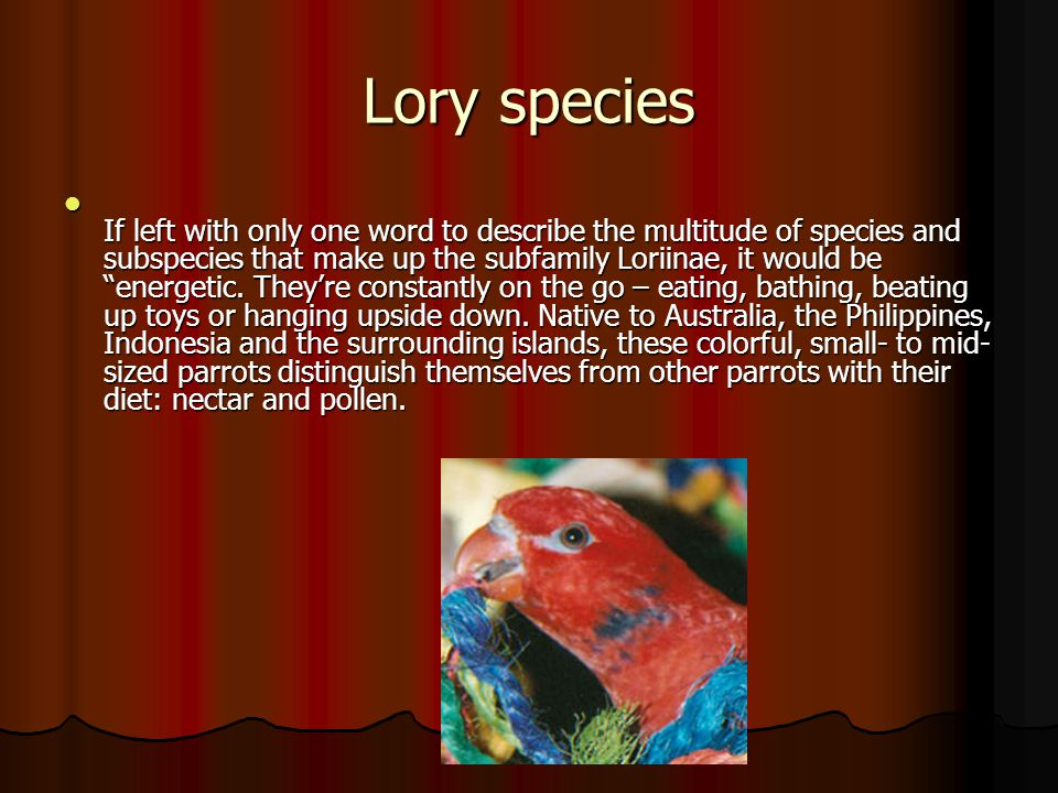 Lory species.
