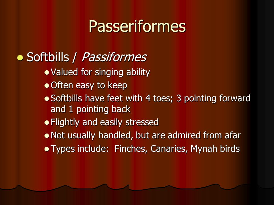Passeriformes Softbills / Passiformes Valued for singing ability