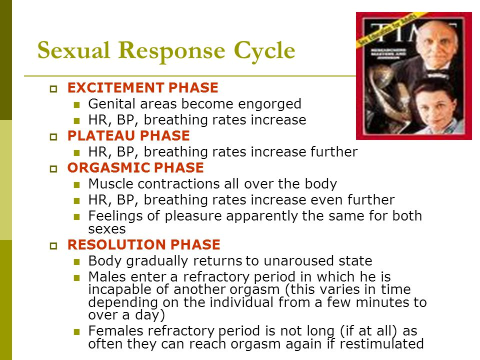 Sexual Response Cycle EXCITEMENT PHASE Genital areas become engorged