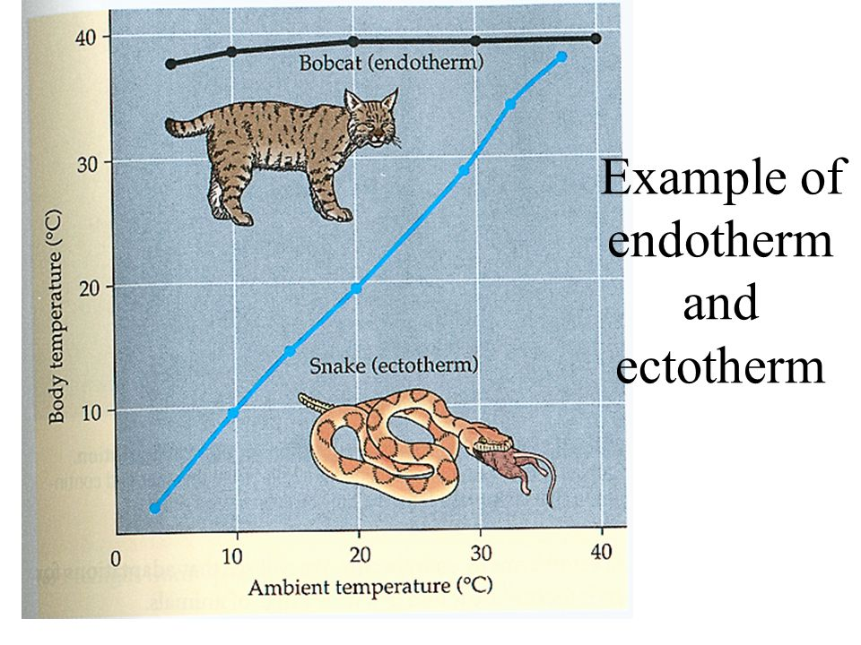 Example of endotherm and ectotherm