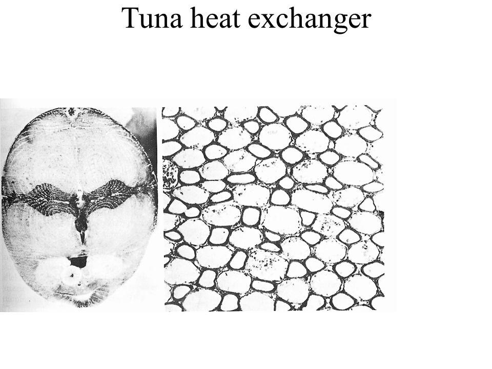 Tuna heat exchanger