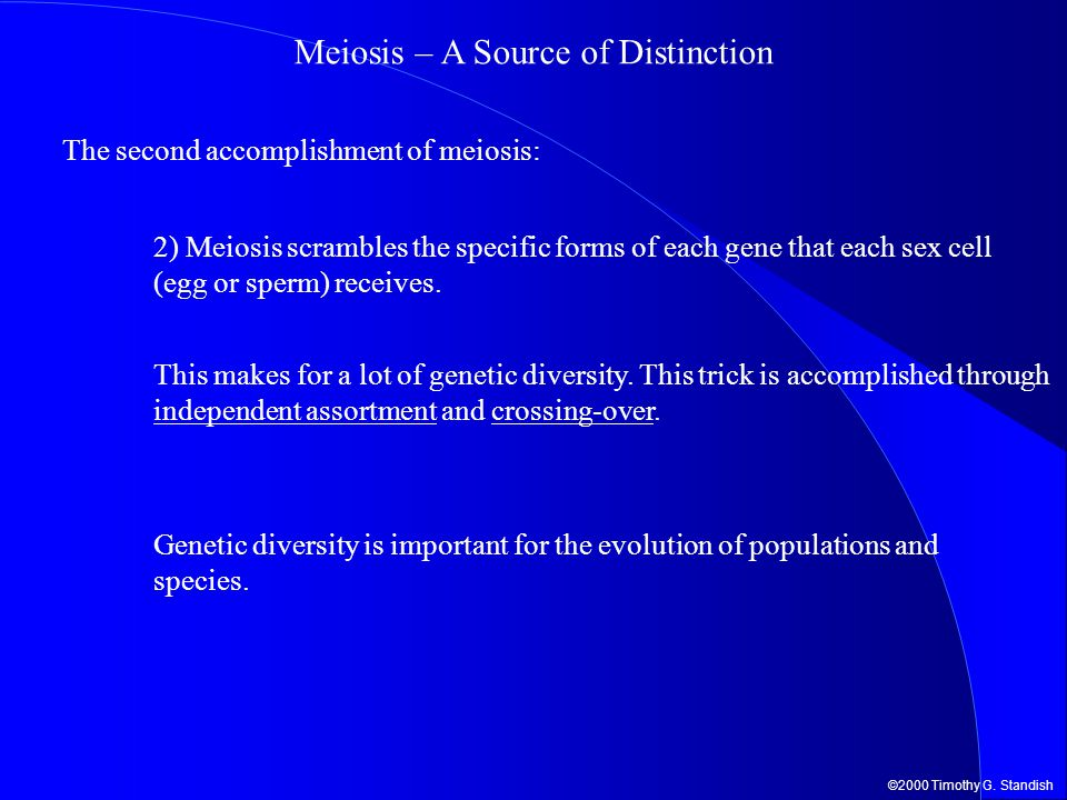 Meiosis – A Source of Distinction