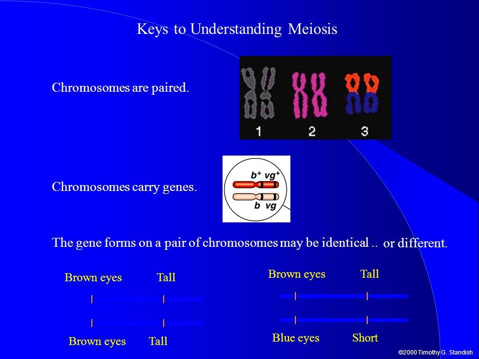 Keys to Understanding Meiosis
