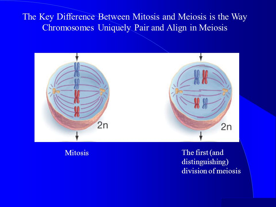 Meiosis 4/14/2017. The Key Difference Between Mitosis and Meiosis is the Way Chromosomes Uniquely Pair and Align in Meiosis.
