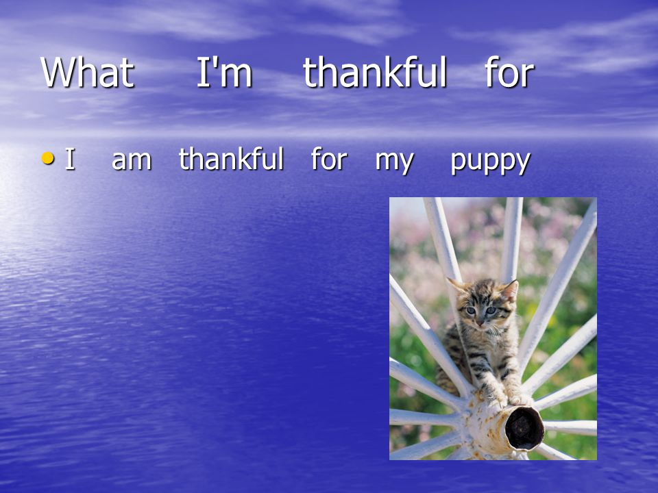 What I m thankful for I am thankful for my puppy