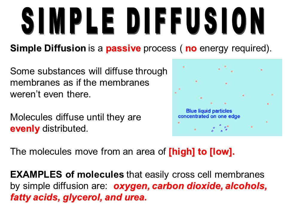 SIMPLE DIFFUSION Simple Diffusion is a passive process ( no energy required).