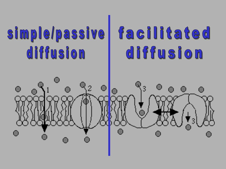simple/passive diffusion facilitated diffusion