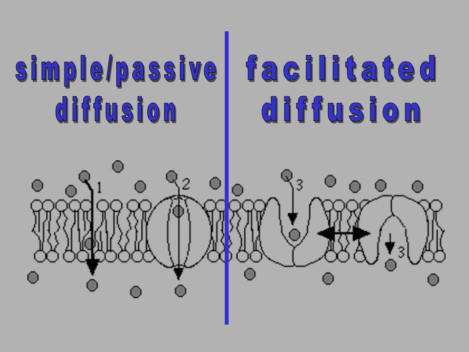 simple/passive diffusion facilitated diffusion