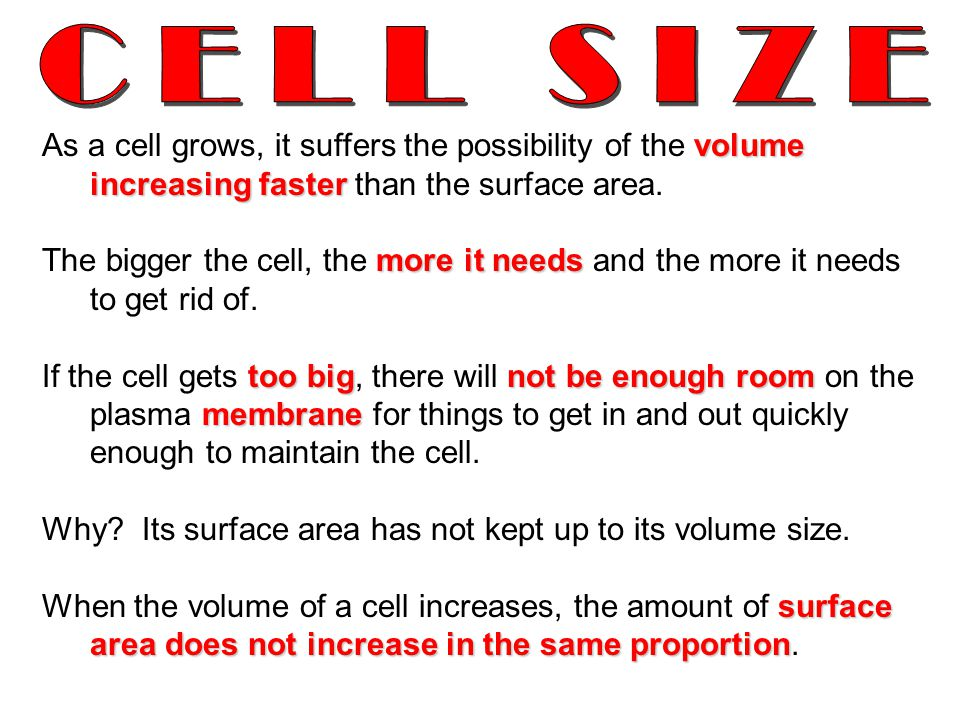 CELL SIZE As a cell grows, it suffers the possibility of the volume increasing faster than the surface area.