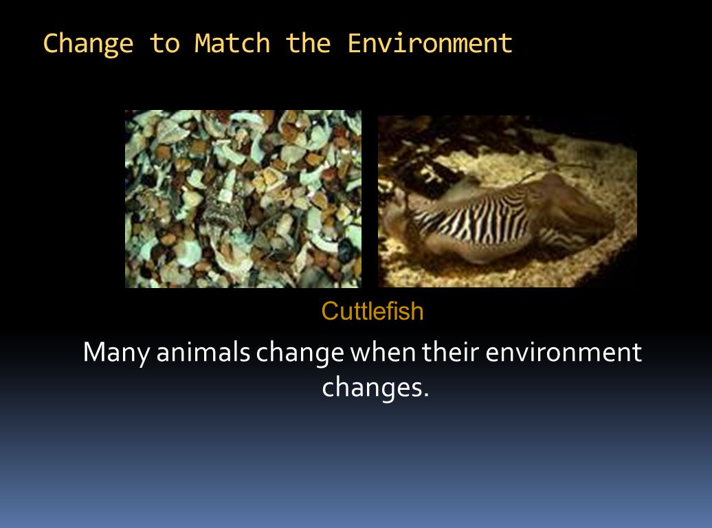 Change to Match the Environment