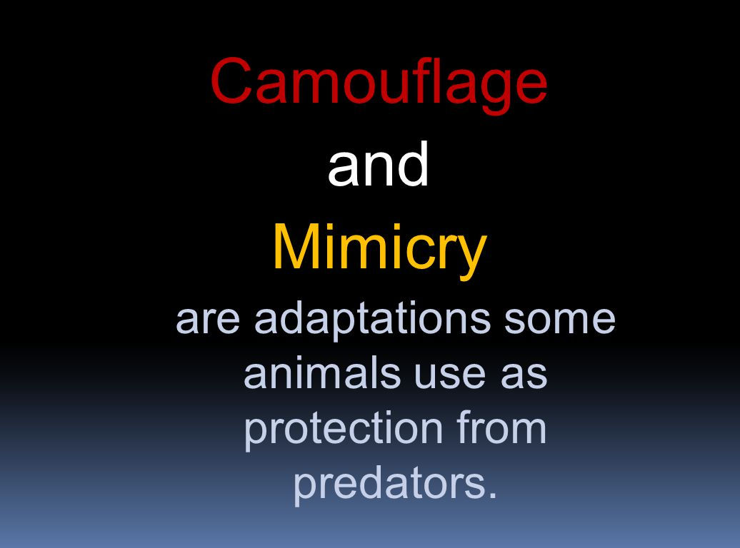 are adaptations some animals use as protection from predators.