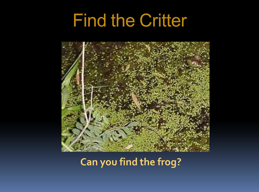 Find the Critter Can you find the frog