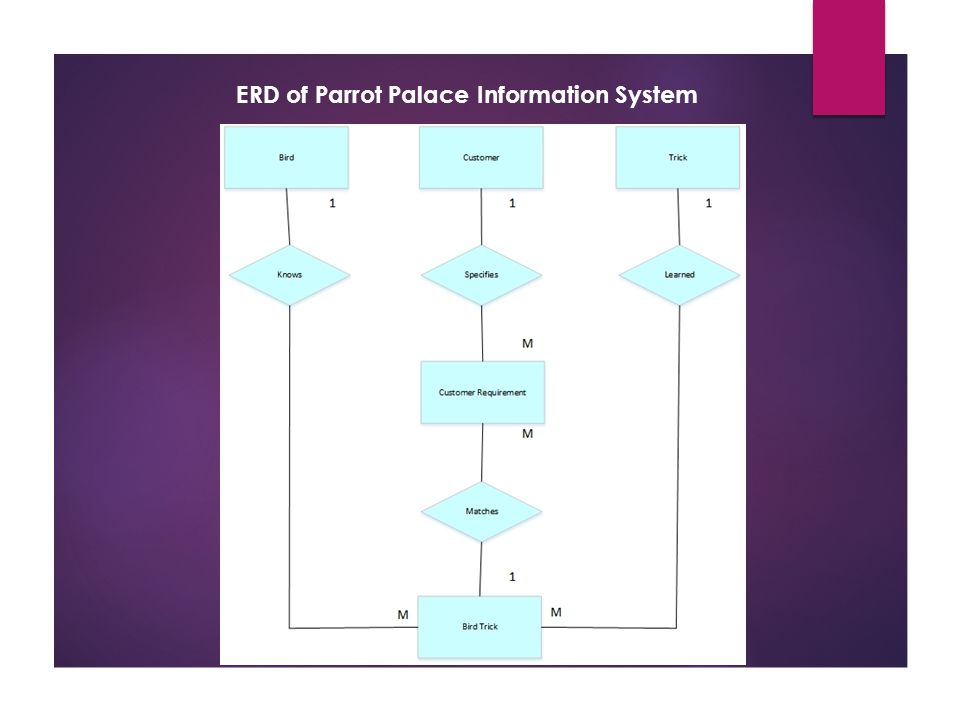 ERD of Parrot Palace Information System