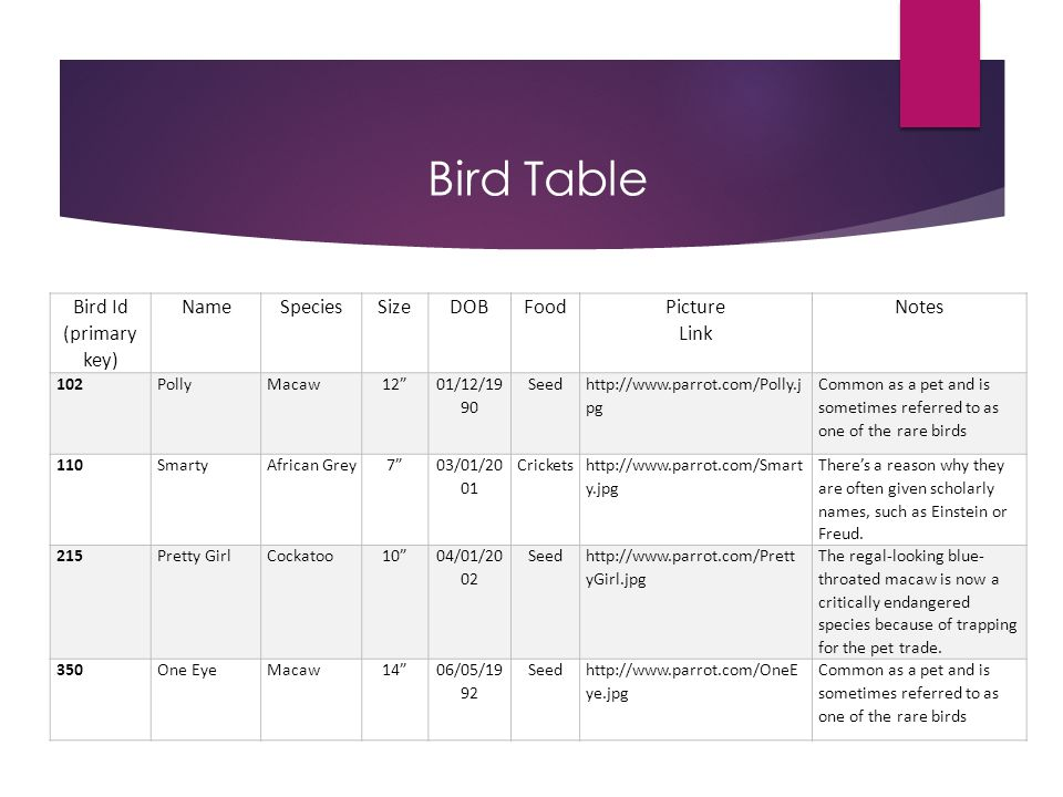 Bird Table Bird Id (primary key) Name Species Size DOB Food Picture