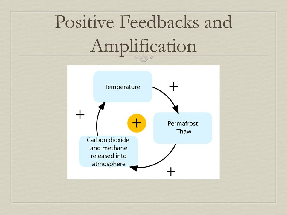 Positive Feedbacks and Amplification