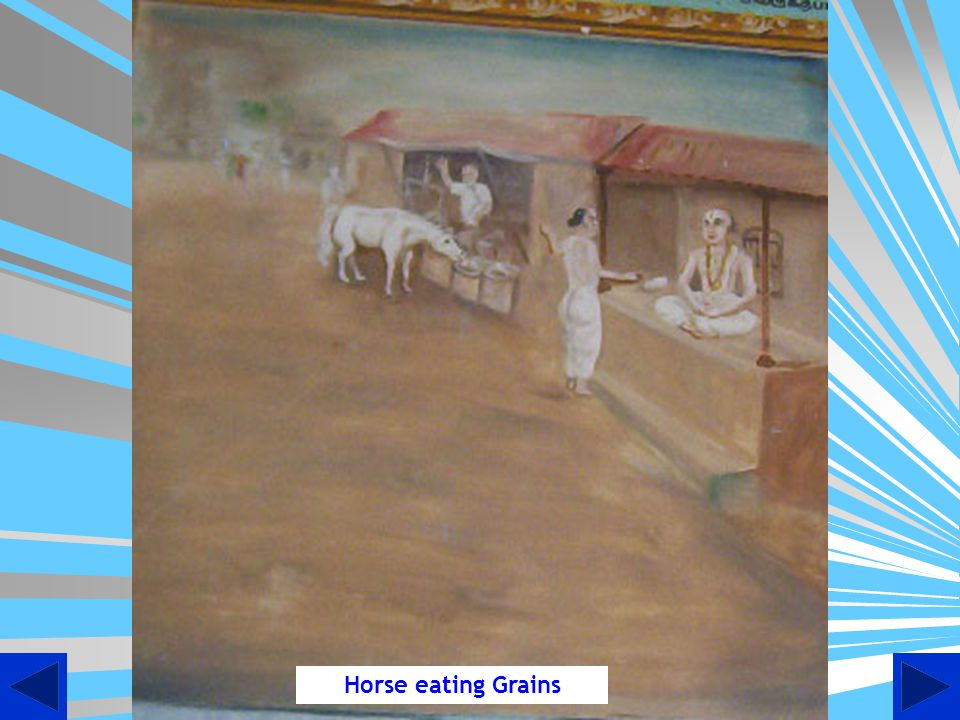 Horse eating Grains