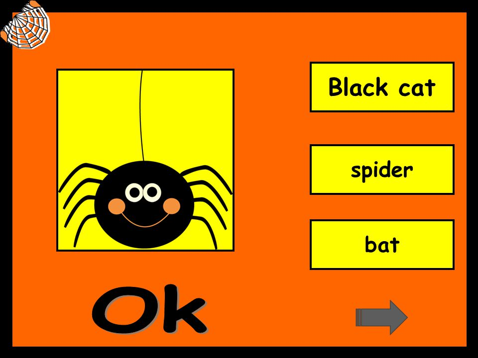 Black cat spider bat Ok