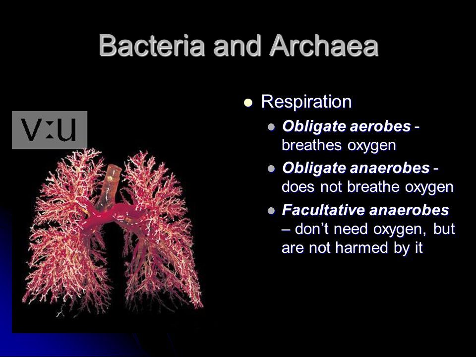 Bacteria and Archaea Respiration Obligate aerobes - breathes oxygen