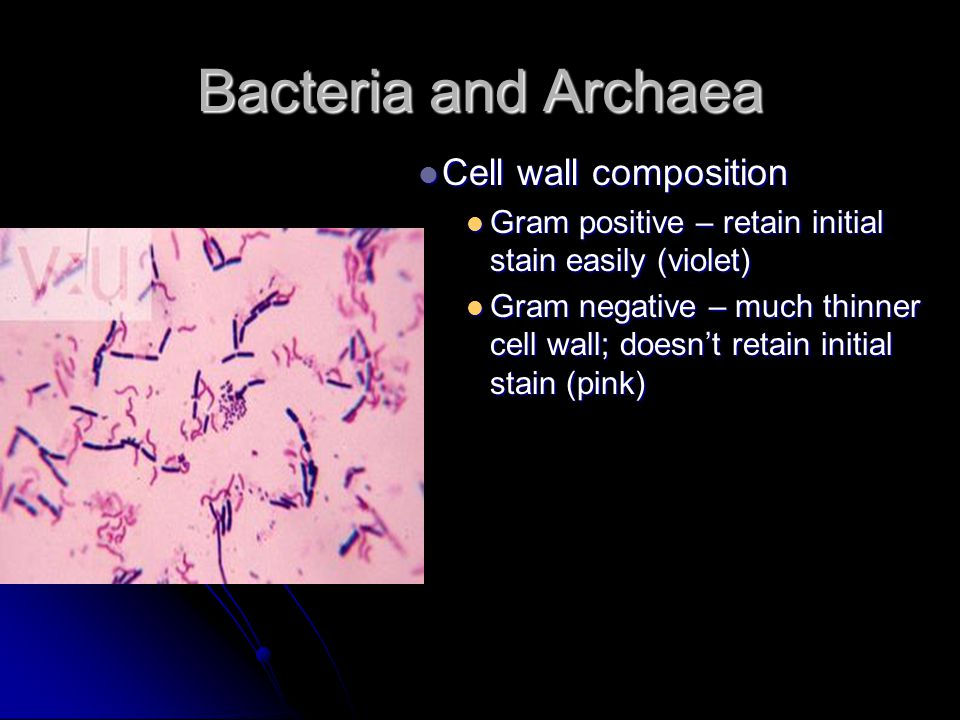Bacteria and Archaea Cell wall composition