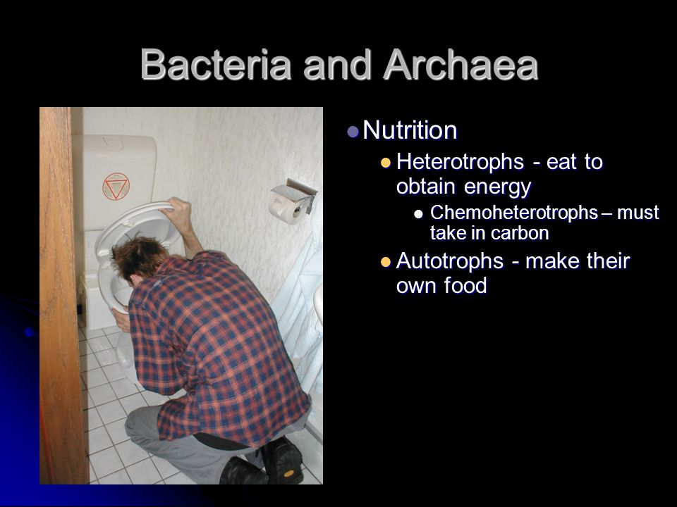 Bacteria and Archaea Nutrition Heterotrophs - eat to obtain energy