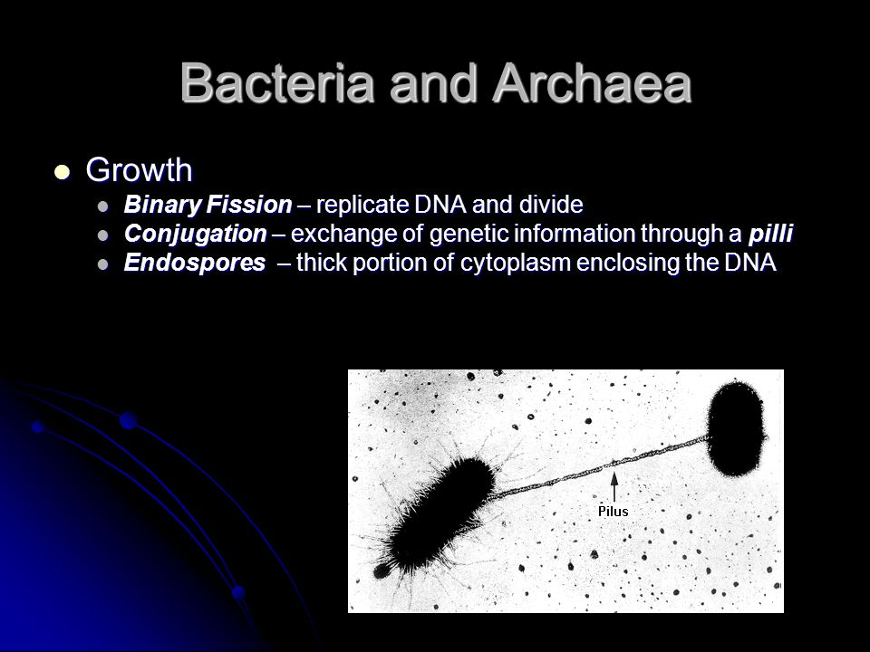 Bacteria and Archaea Growth Binary Fission – replicate DNA and divide