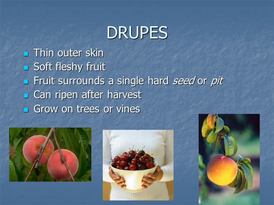 DRUPES Thin outer skin Soft fleshy fruit
