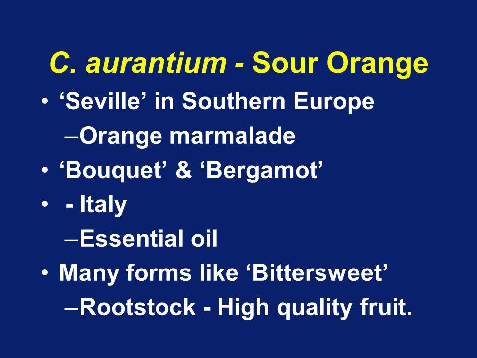 C. aurantium - Sour Orange